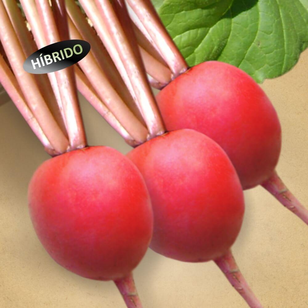 Sementes De Rabanete Híbrido Ruby - 500 Gramas