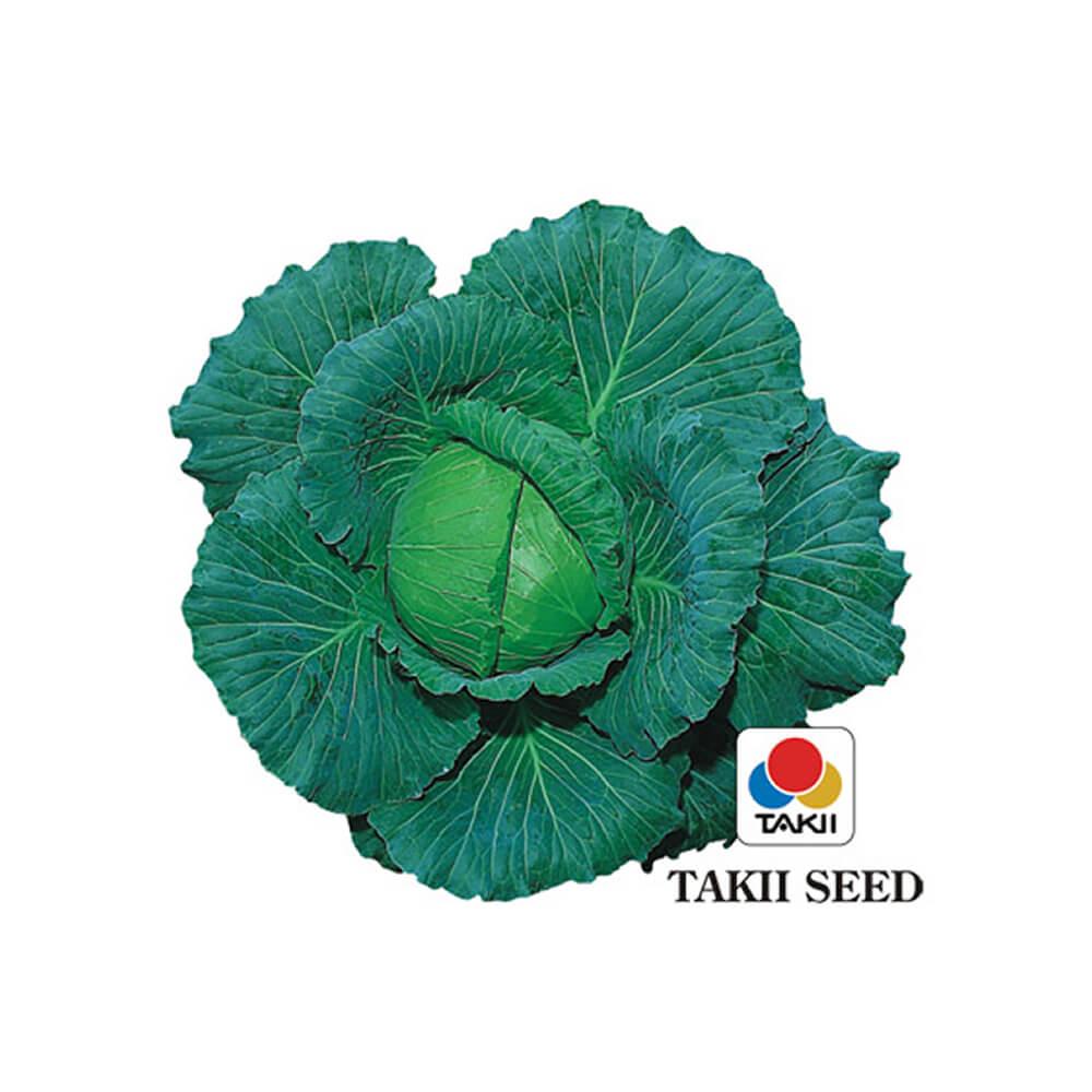 Sementes de Repolho H. Sooshu - 100 gramas - Takii