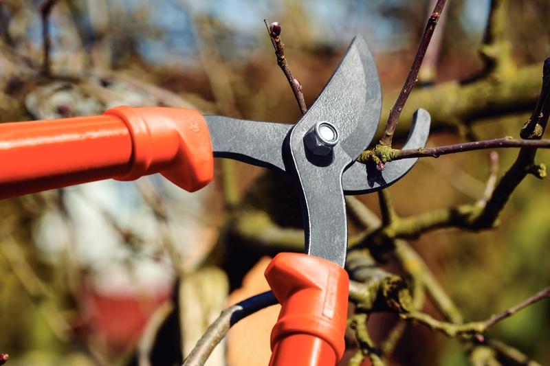 Tesourão de Poda tipo Bypass em Aço Carbono e Cabo de Madeira 60cm - Tramontina