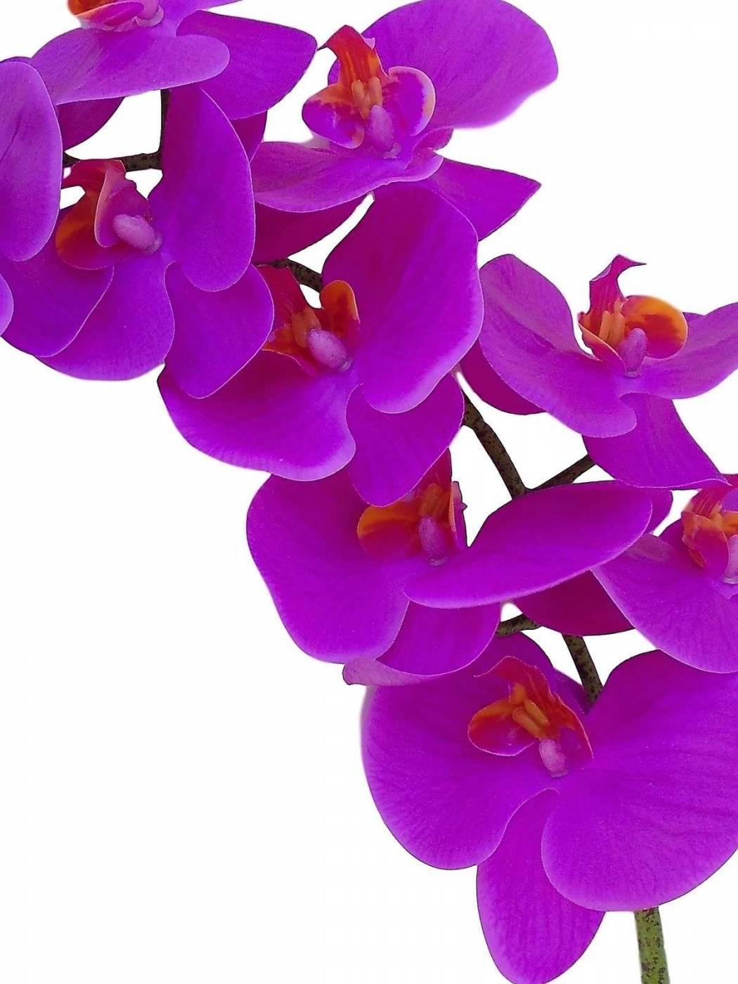 6 Orquídeas artificiais de silicone em promoção
