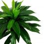 Árvore Artificial Dracena 100 cm Folhas em Silicone Realista