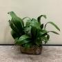 Folha de Orquídea Silicone Planta Artificial