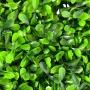 Placas Artificiais com Folhas de Amendoim 60x40 Para Jardim Vertical