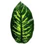 Planta Artificial Folha de Comigo Ninguém Pode 83 cm Revestida em Silicone