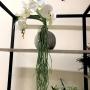 Planta Artificial Folhagem Pendente de Raiz 120 cm de Para Decoração e Enfeite