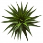 Planta Artificial Mini Árvore Agave 60 cm