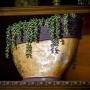 Suculenta Artificial Pendente de Rosário 35 cm em Silicone