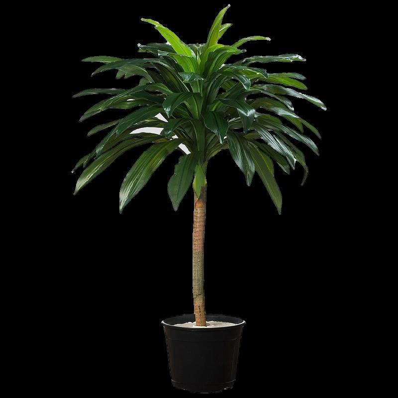 Árvore Artificial Dracena Verde folhas toque real 100 cm Frete Grátis