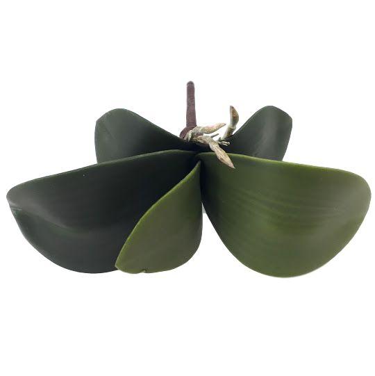 Folha de orquídea com raiz  pequena