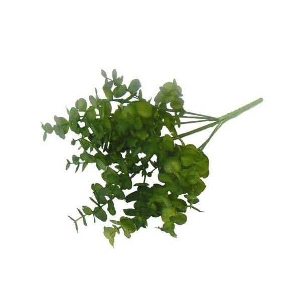 Kit Folhas de Eucalipto