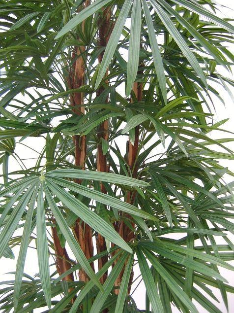 Planta Artificial Mini Arvore Rafia Permanente 100 cm