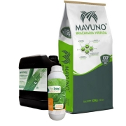 Compre 10 sacas de Brachiaria Híbrida Mavuno e GANHE 20L Pastotal Nitro+ com 1L Adjuvant