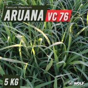 Sementes para Capim ARUANA VC76 (Saco de 5kg)
