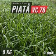 Sementes para Capim BRS PIATÃ VC76 (Saco de 5kg)