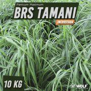 Sementes para Capim BRS TAMANI Incrustada (Saco de 10kg)