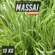 Sementes para Capim MASSAI Incrustrada (Saco de 10kg)