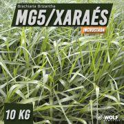 Sementes para Capim XARAÉS MG-5 Incrustada (Saco de 10kg)