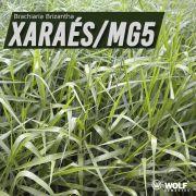 Sementes para Capim XARAÉS MG-5 VC76 (Saco de 5kg)