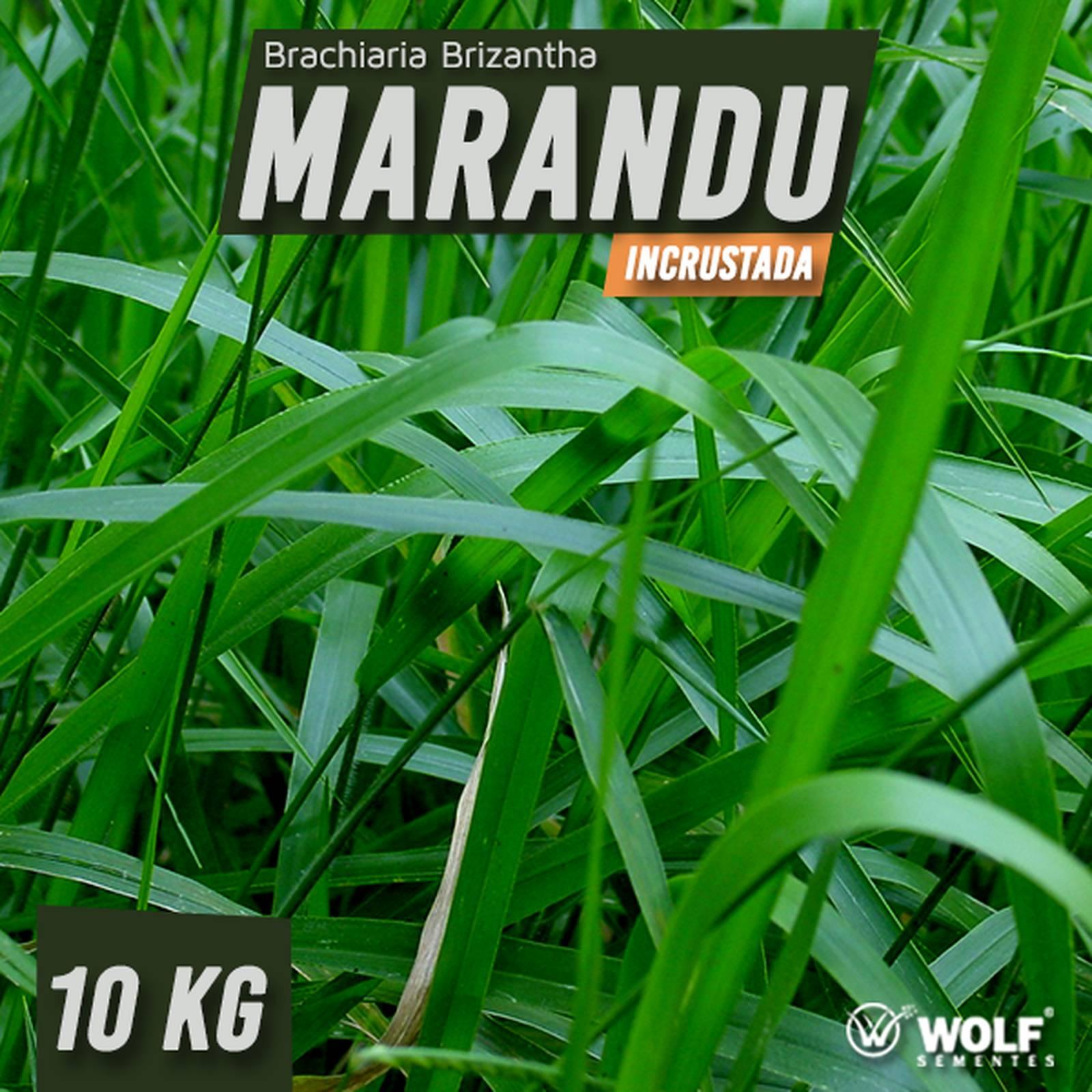 Combo 100kg Brachiaria Brizantha Marandu Incrustada + 20L Fertilizante Foliar Pastotal Nitro+