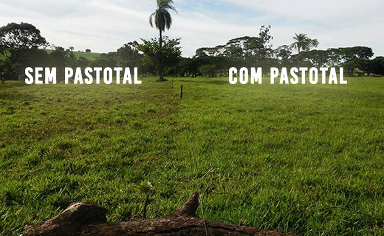 Fertilizante Foliar Para Pasto 20 Litros Pastotal