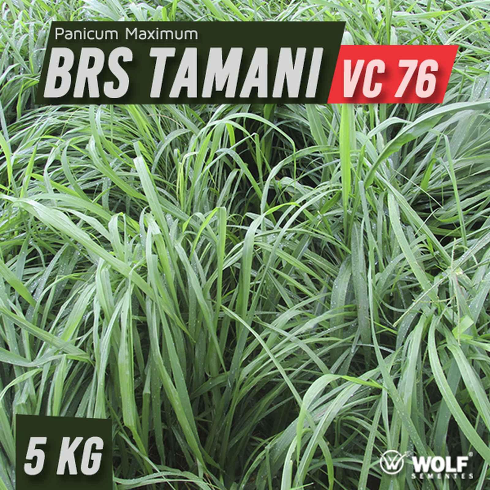 Sementes para Capim BRS TAMANI VC76 (Saco de 5kg)