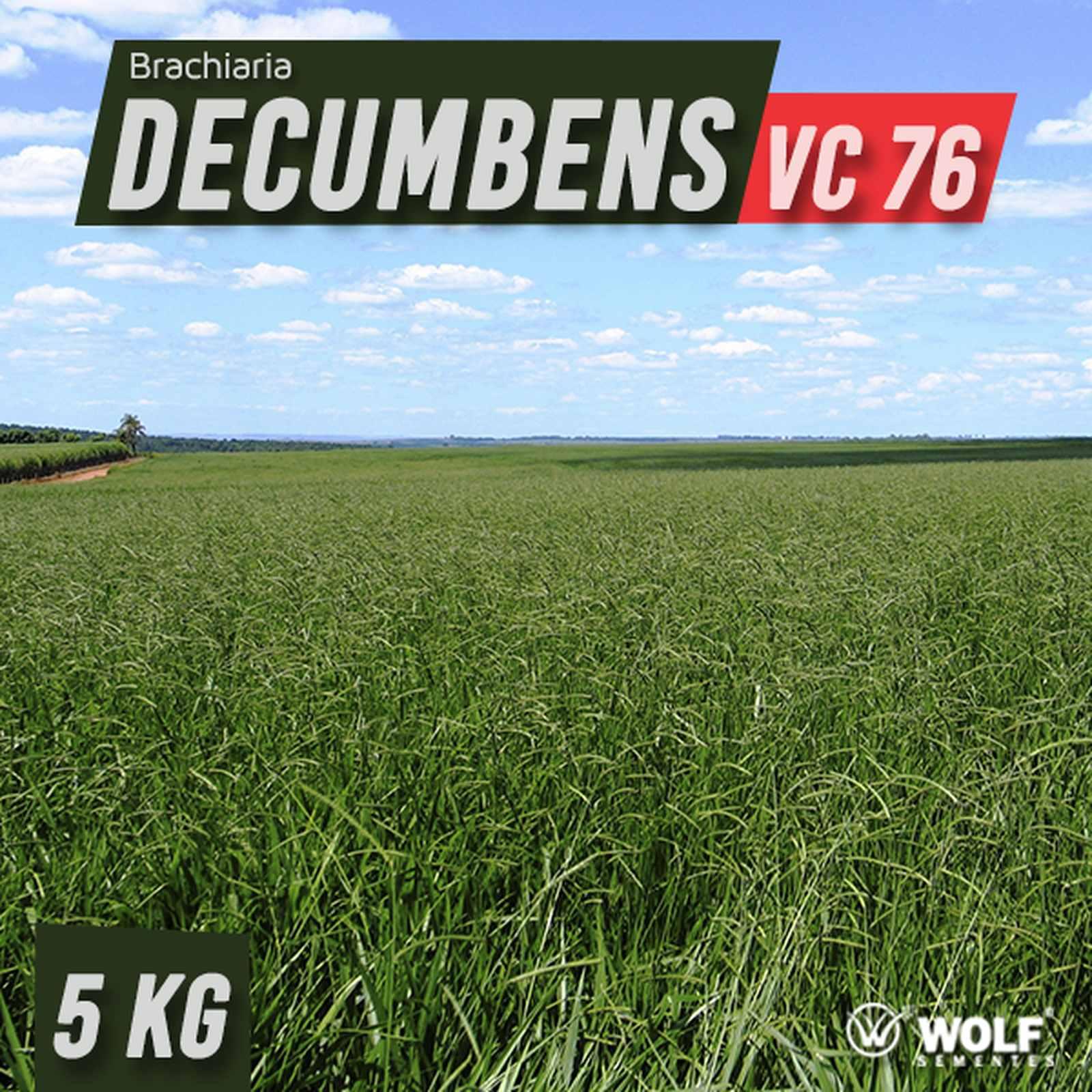 Sementes para Capim DECUMBENS Basilisk VC76  (Saco de 5kg)