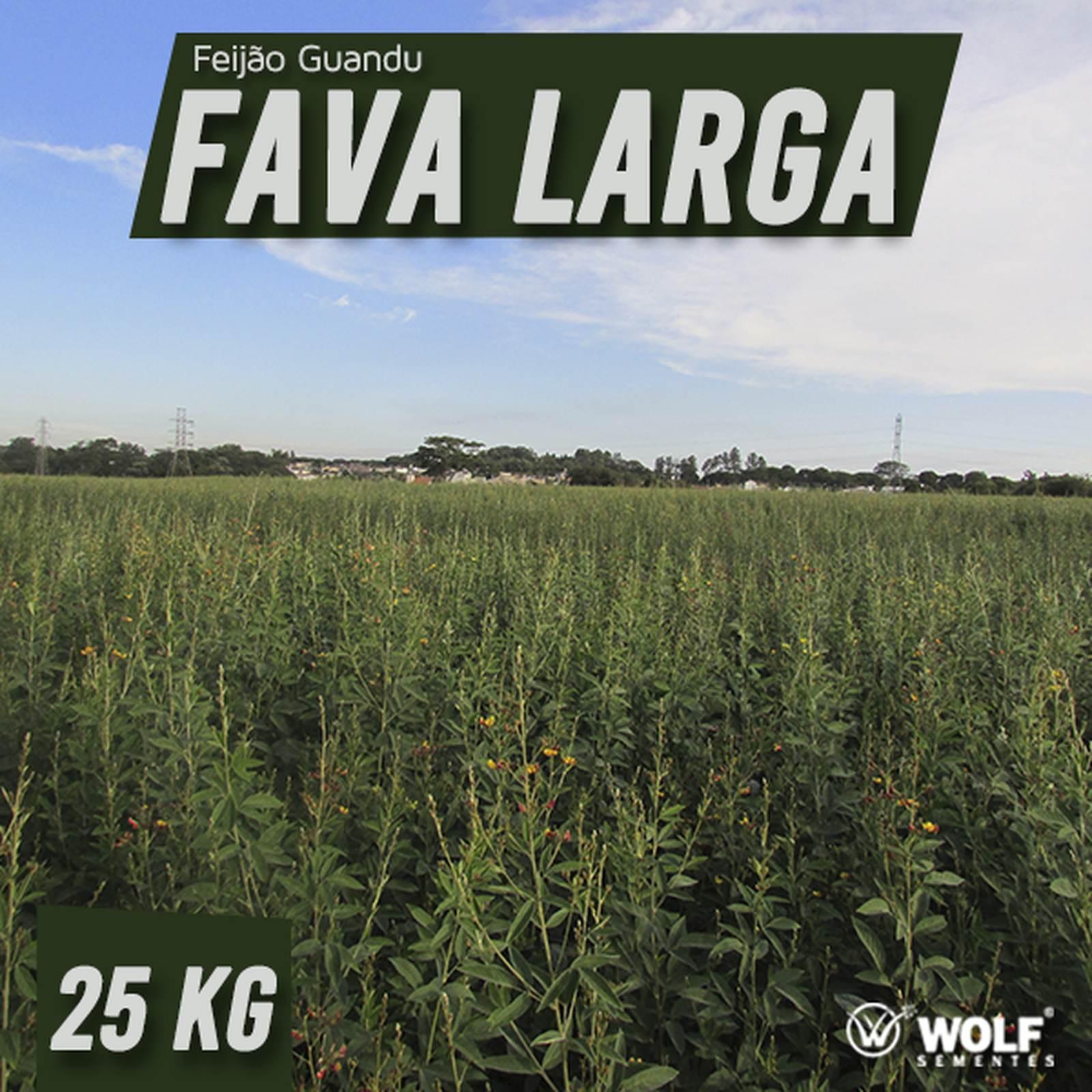 Sementes para Capim Feijão Guandu FAVA LARGA (Saco de 25kg)
