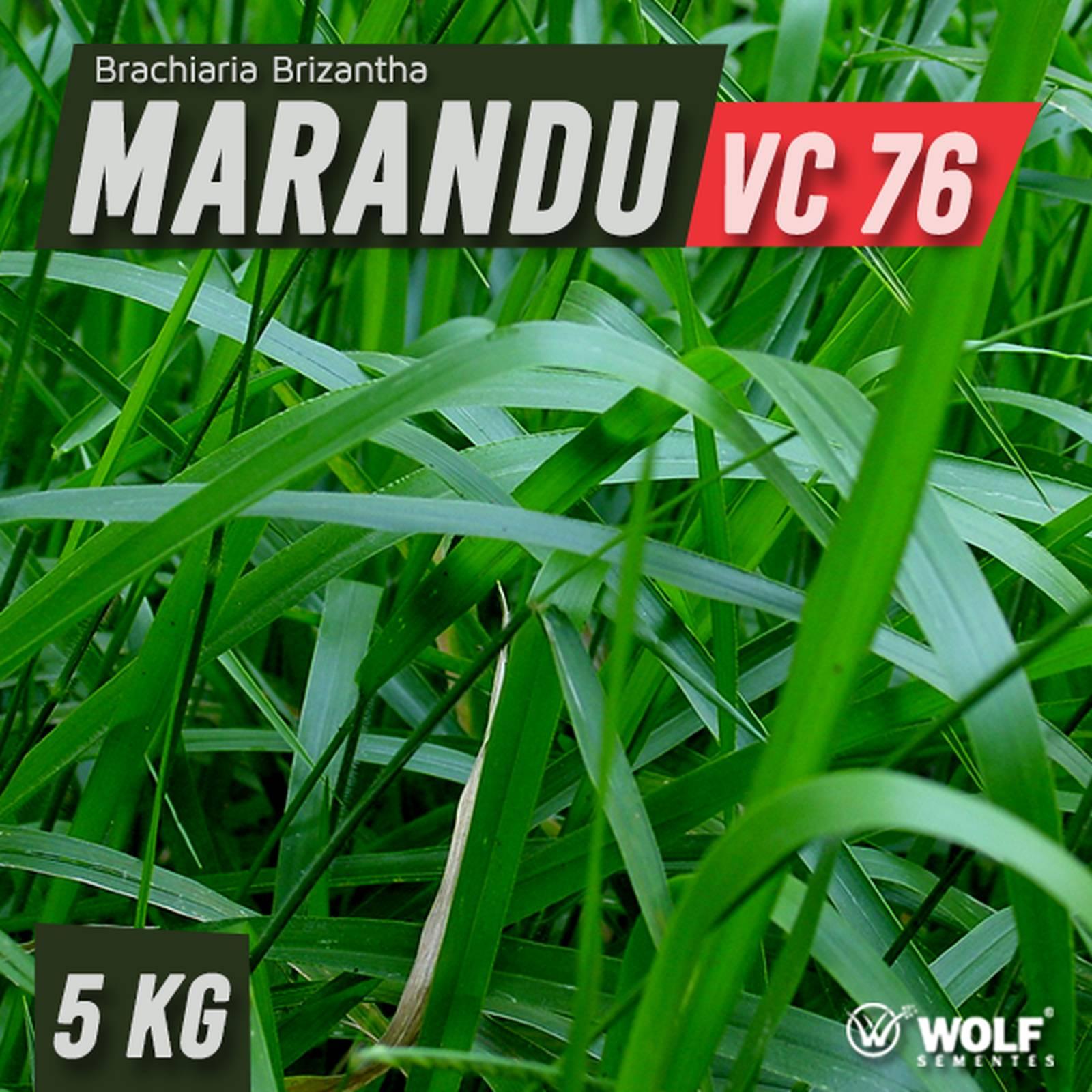 Sementes para Capim MARANDU VC76 (Saco de 5kg)