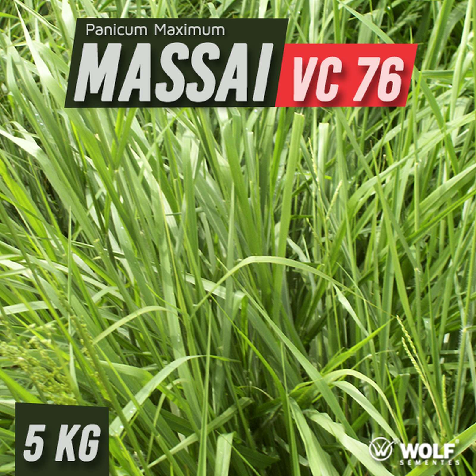 Sementes para Capim MASSAI VC76 (Saco de 5kg)
