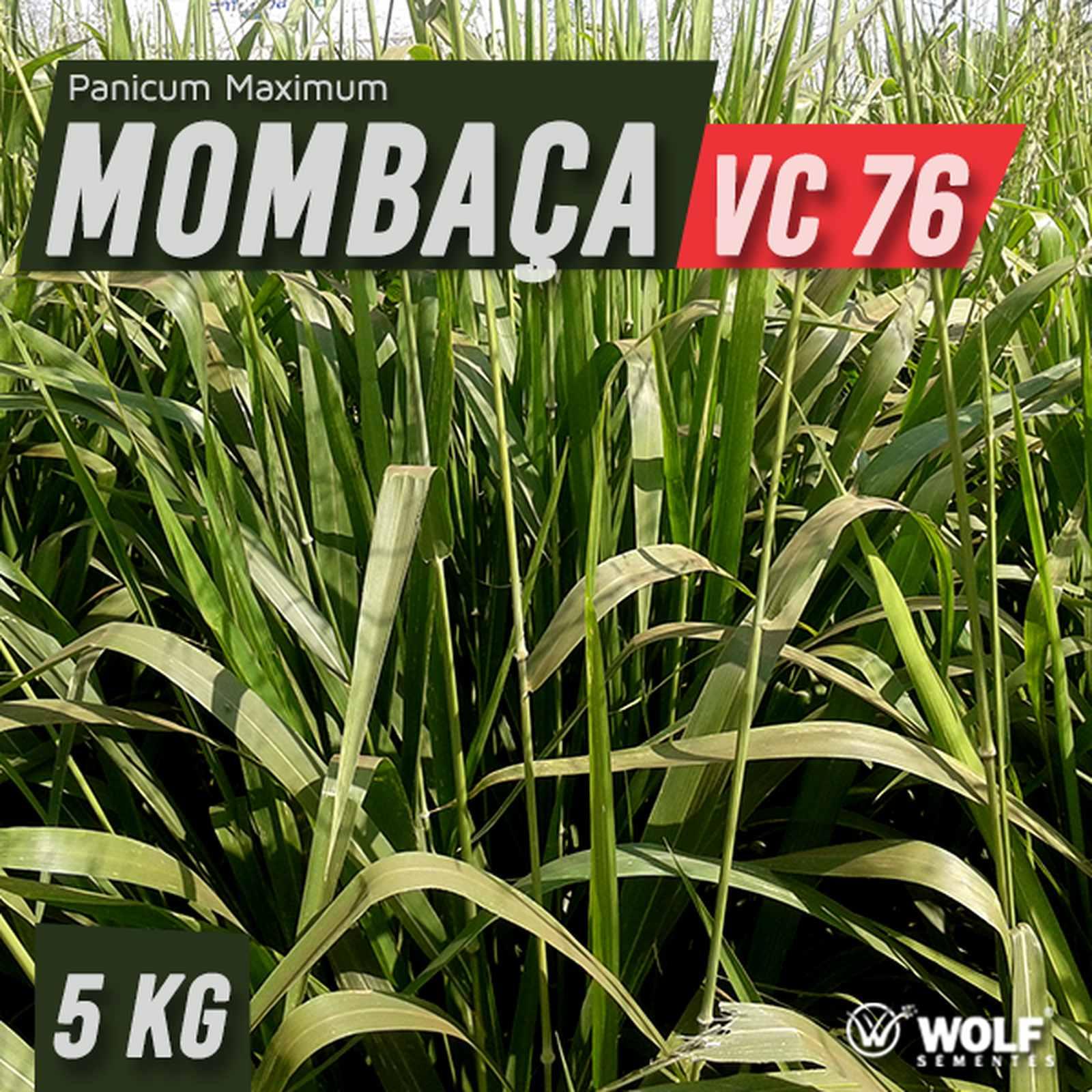 Sementes para Capim MOMBAÇA VC76 (Saco de 5kg)