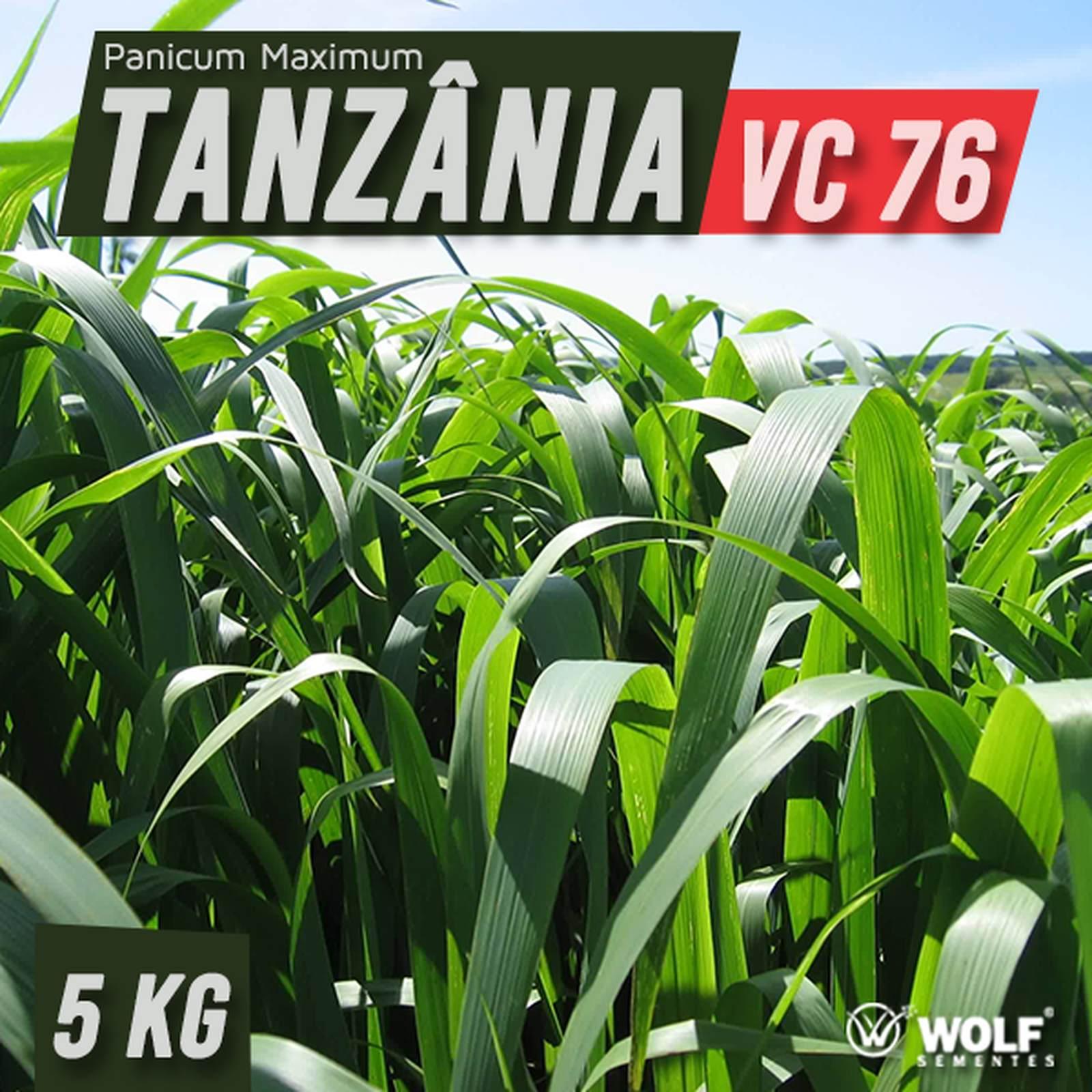 Sementes para Capim TANZÂNIA VC76 (Saco de 5kg)