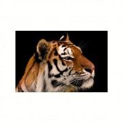 Placa Decorativa MDF Tigre Esotérico