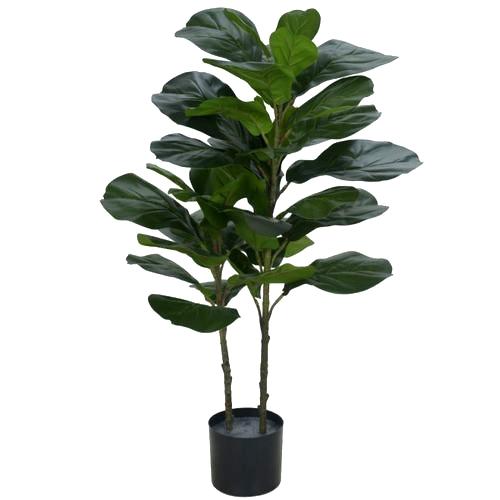 Árvore Ficus
