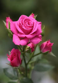 Desodorante Natural Twist Stick BLISS Rosas e íris | Lafe's - 64g