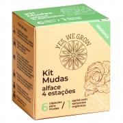 Kit Mudas | Alface