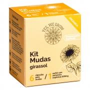Kit Mudas | Girassol