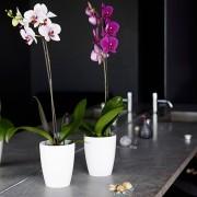 Vaso Orquidea 15 x 13 cm Roxo