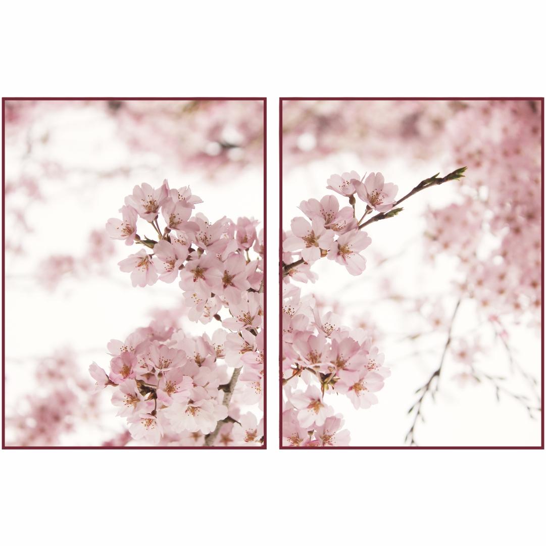 Composição com 2 Quadros Decorativos Flor de Cerejeira com Fundo Branco