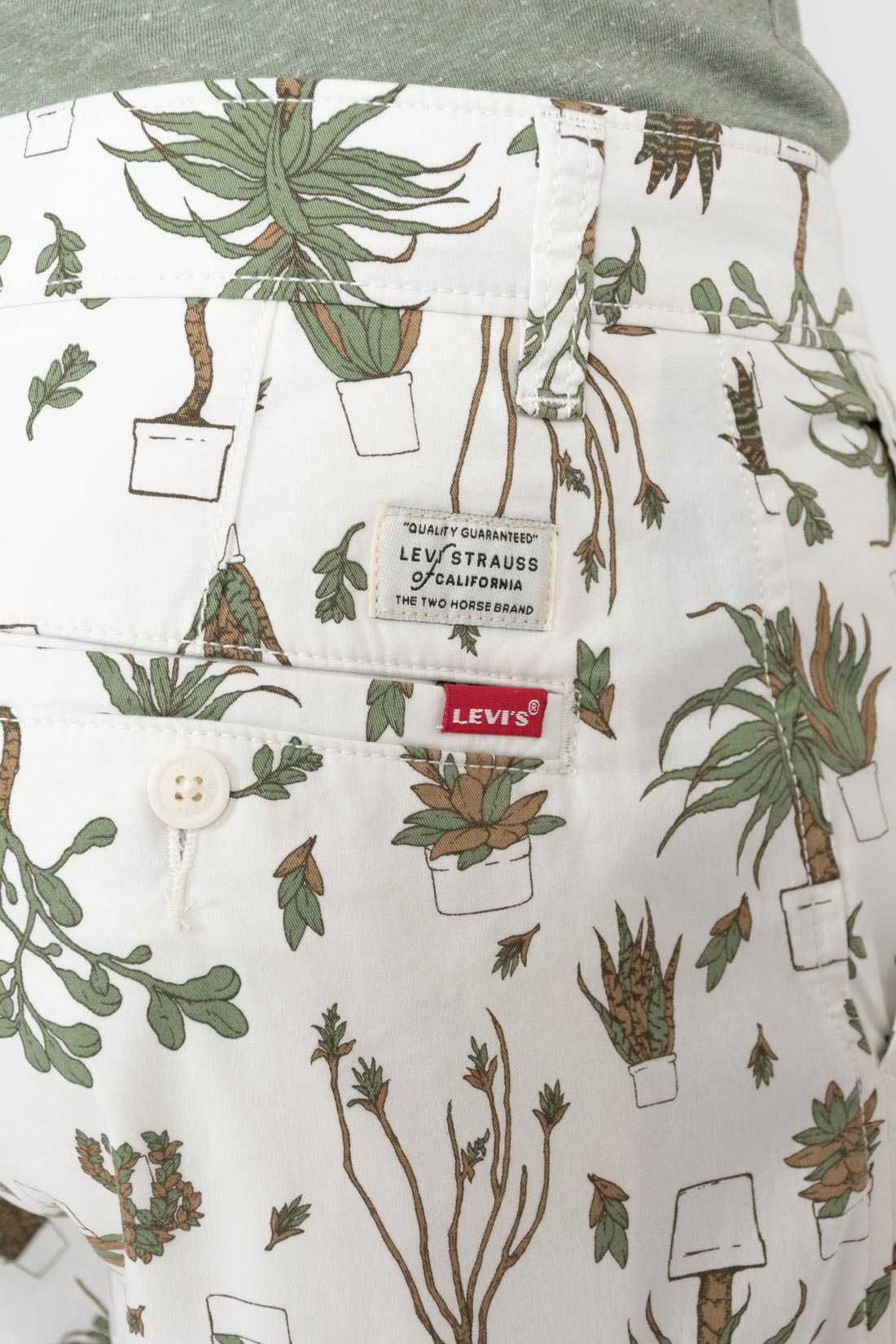 Bermuda Levis Plantas