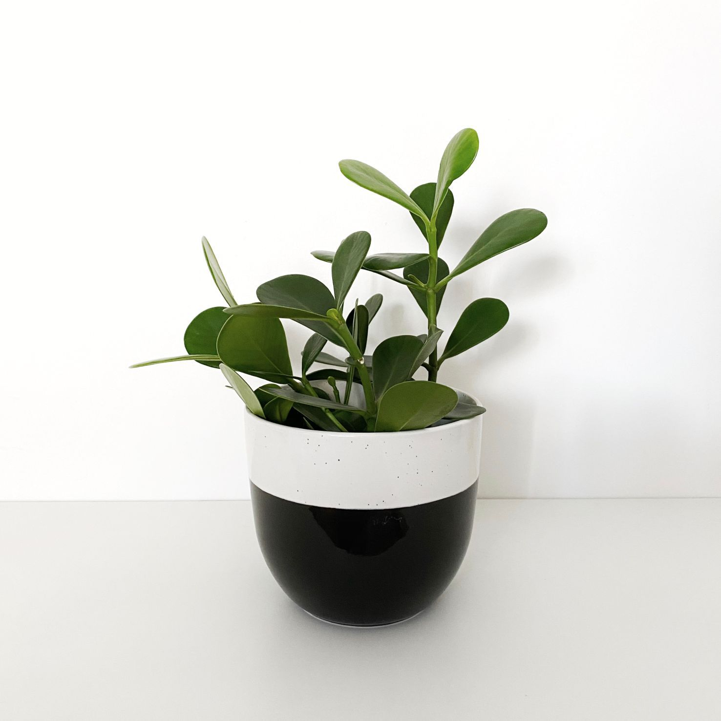 Vaso de Cerâmica Bicolor com Preto