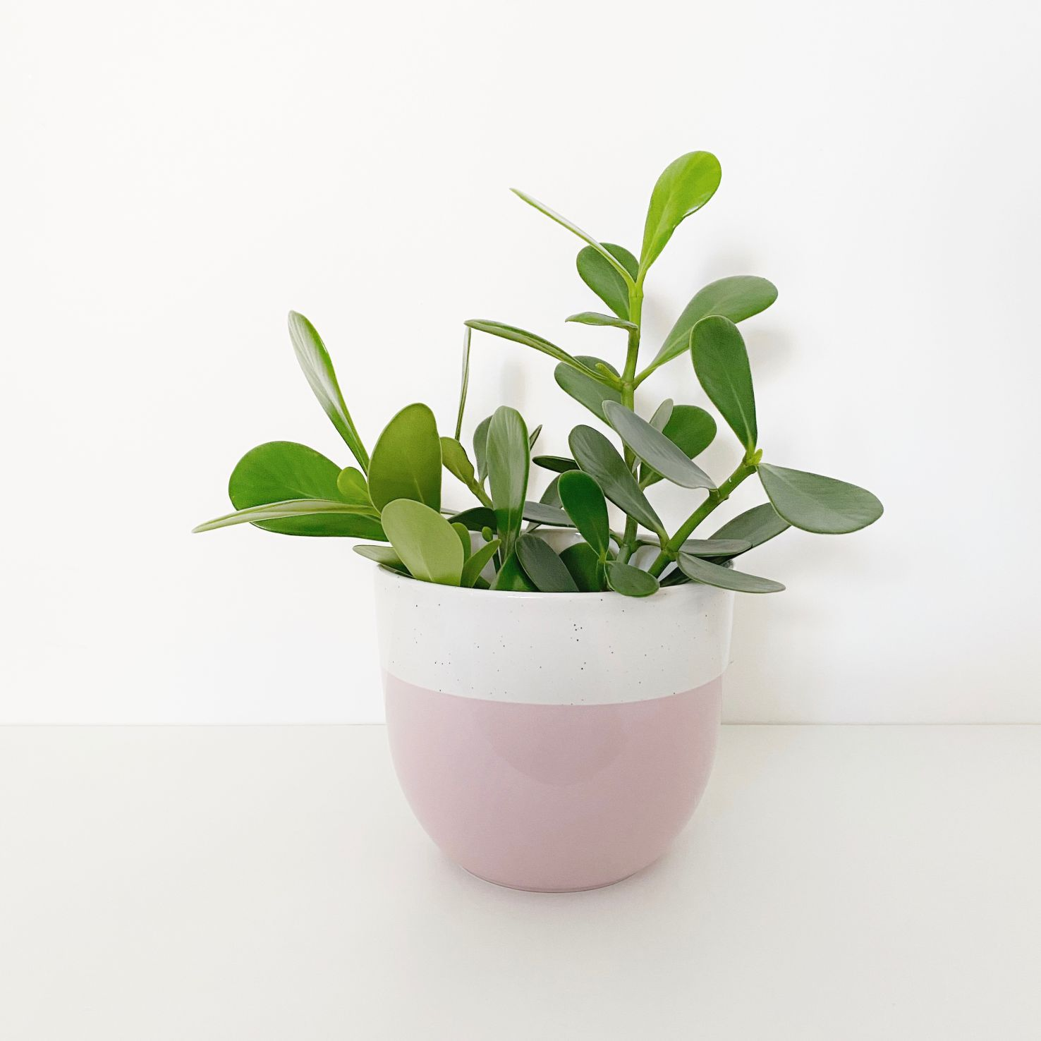 Vaso de Cerâmica Bicolor com Rosa