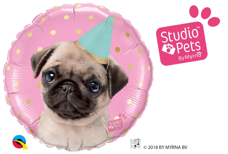 BALÃO METALIZADO REDONDO STUDIO PETS - PUG FESTEIROS  - 18 POLEGADAS - QUALATEX #57617
