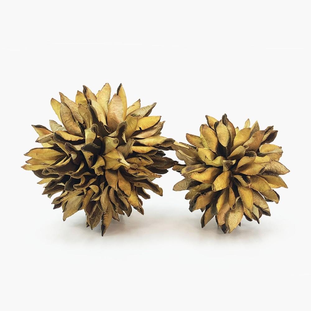 Topiaria Bate-Caixa Amarela - Foto 1