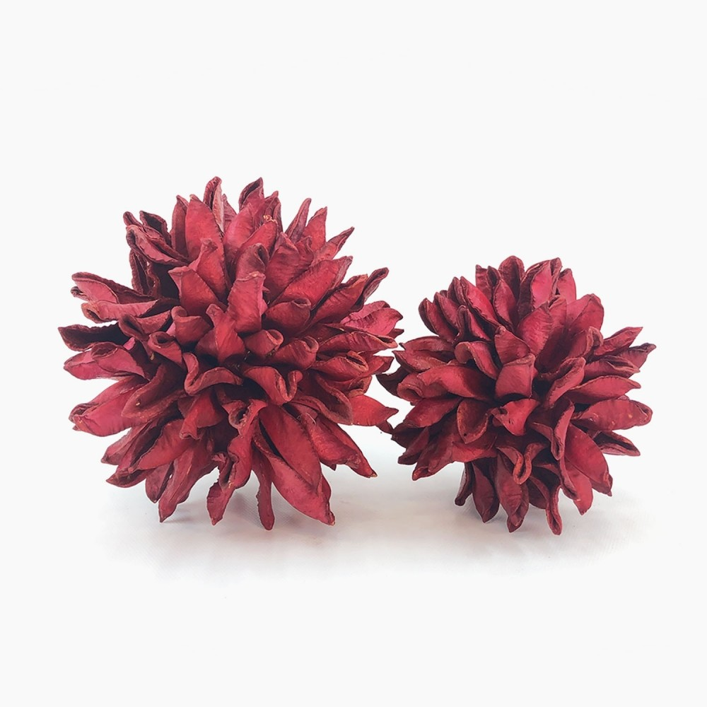 Topiaria Bate-Caixa Vermelha  - Foto 1