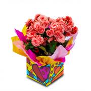 Begonia Rosa Pink