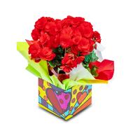 Begonia Vermelha