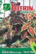 Coleus De Java Arco Iris S. 230Mg - Flor