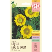 Girassol De Jardim Anao