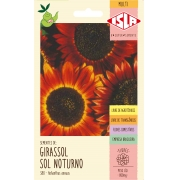 Girassol Sol Noturno