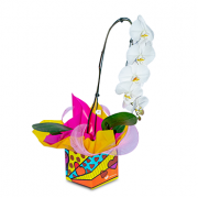 Orquídea Cascata Branca